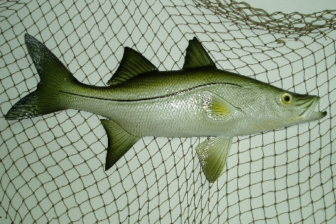 28in Snook Wall Decor
